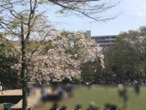 茅ヶ崎中央公園さくら祭り噴水前の花見客