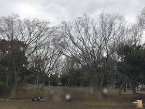 中央公園奥左側の桜